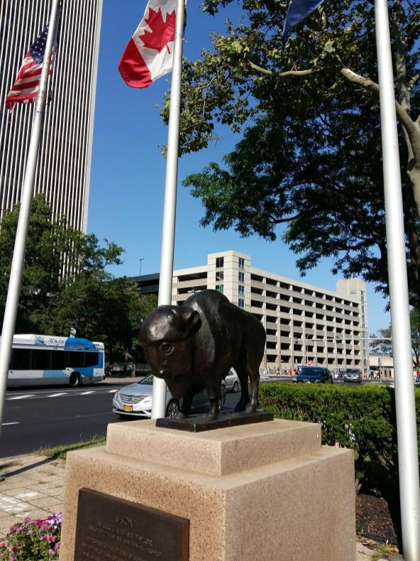 buffalo in Buffalo